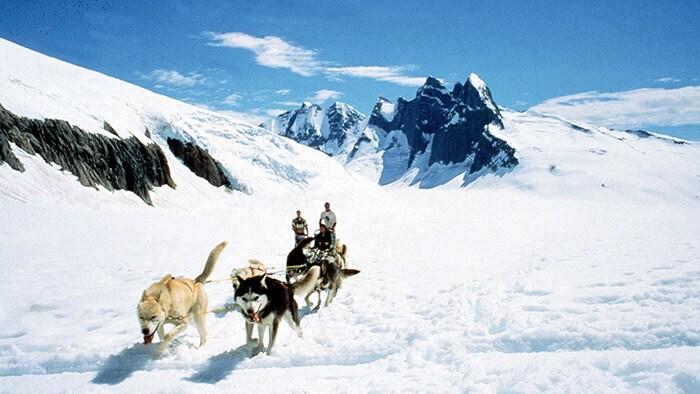 Un grupo de perros de trineo jala a 2 personas a través de una gruesa capa de nieve en una montaña