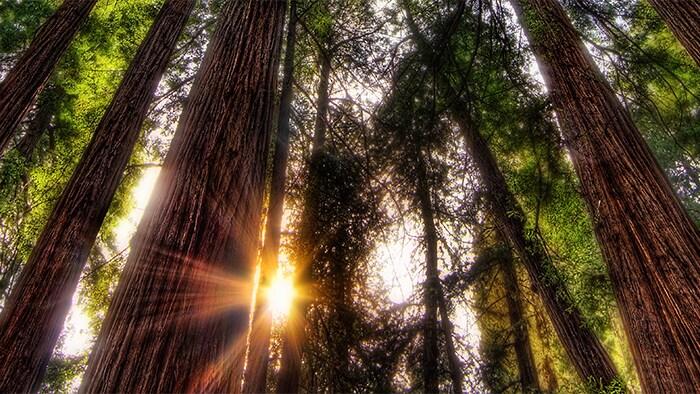 La luz del sol filtrándose por un bosque